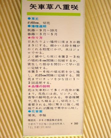 Colleenfun_060_5